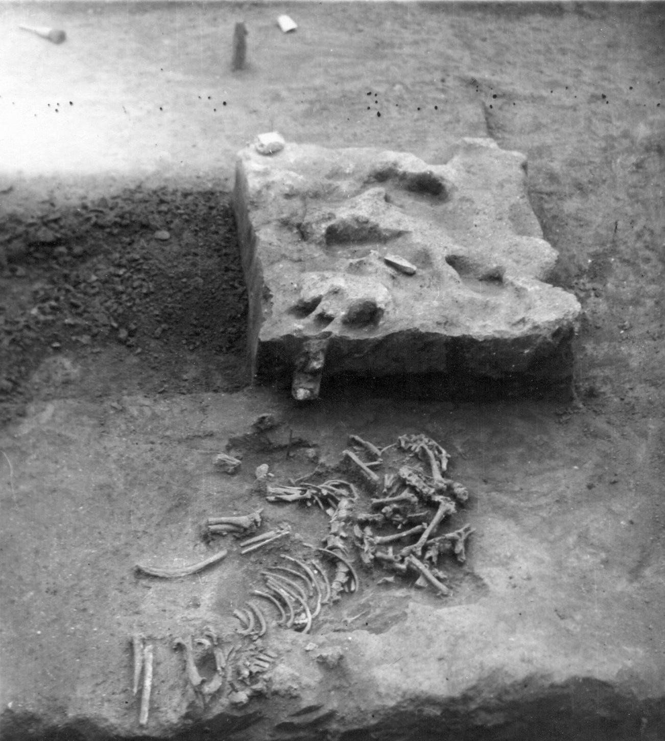 The c.28,000-year- old burial of four wolves at Kostënki 11, under excavation in the 1950s (Image: IHMC RAS, No. O.2051-54)